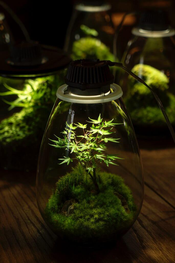 Cannabis Grow Lights - The Ultimate Guide